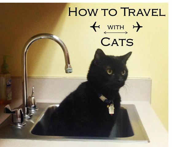 TravelwithCats