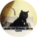 9_howtotravelwithcats
